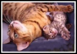 Bengal cat with its kitten