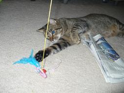 Nowby playing with the string next to the newspaper