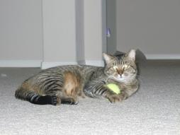 picture of our cat holding a tennis ball