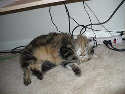 Our fury cat sleeping under computer desk