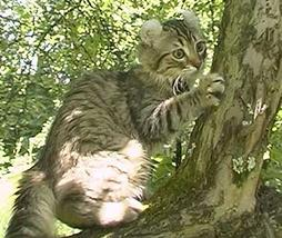 American Curl cat at the tree